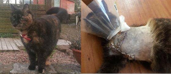 Maimed cat, Armagh