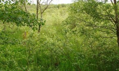 Brackagh Moss, county Armagh