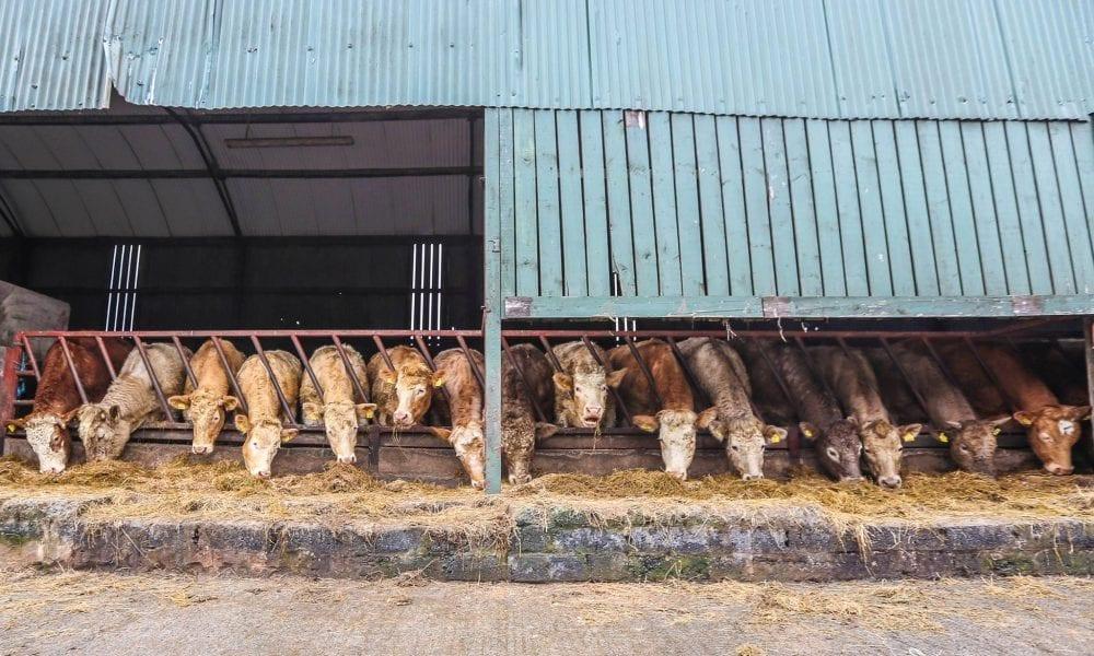 Feeding time in south Armagh, March 2017. Photo by Tara Morgan