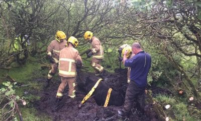 Firefighters rescue cow