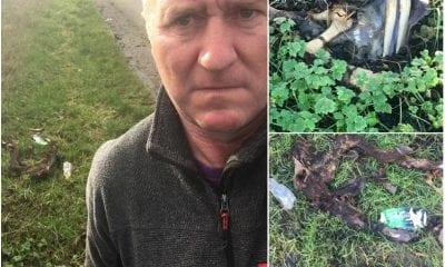 Calf carcass Derrymacash Declan McAlinden