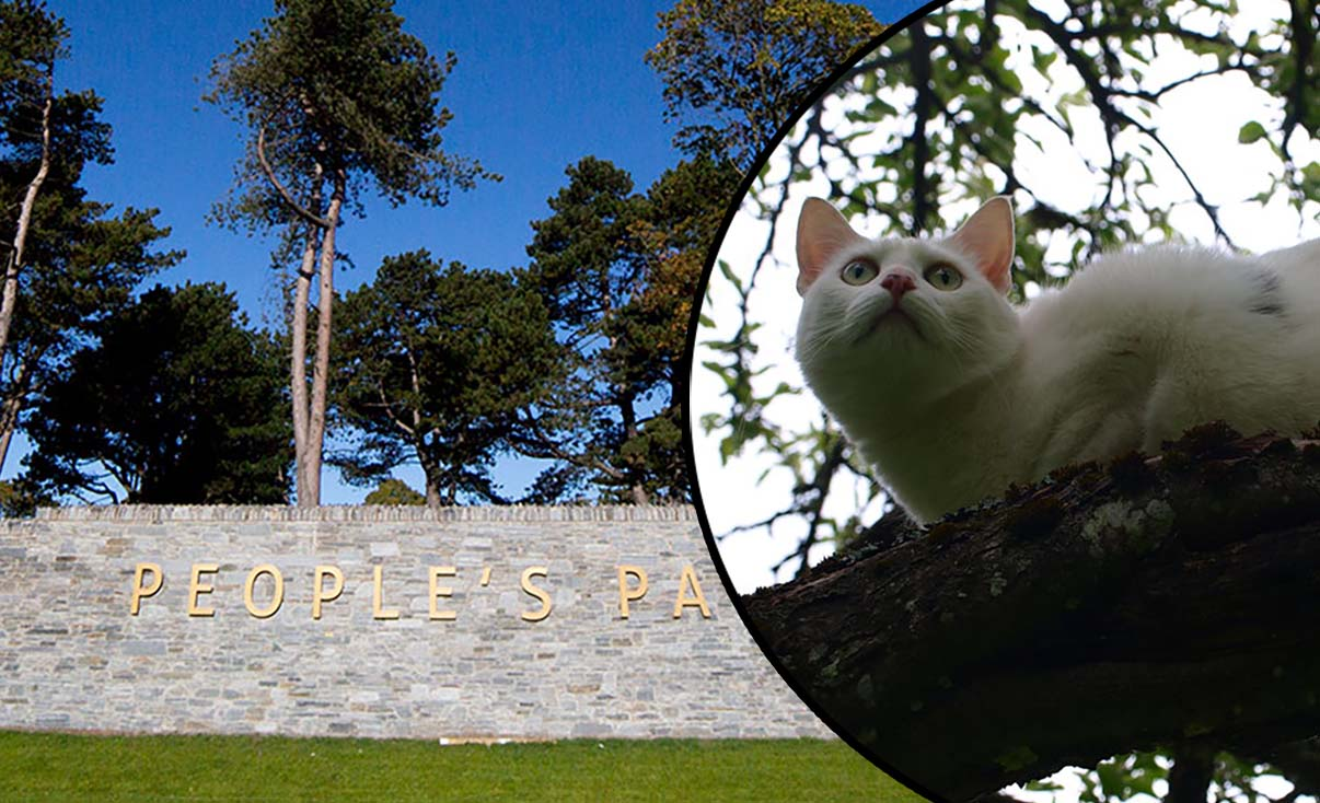 People's Park cat
