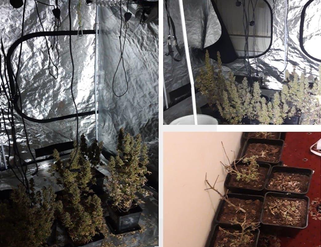 Cannabis Newtownhamilton
