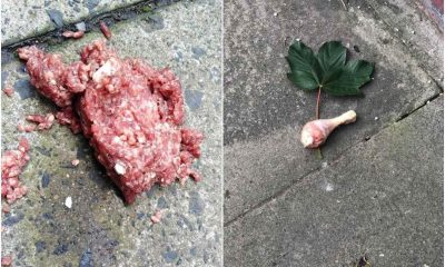 Meat laced with tablets Lurgan