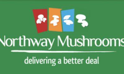 Northway Mushrooms