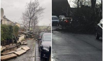 Fallen tree Keady