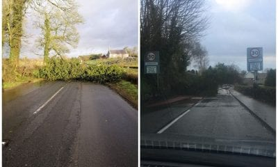 Trees down Co Armagh