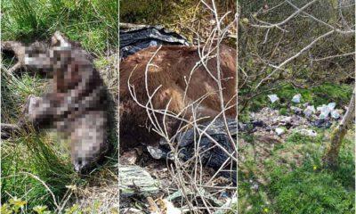 Dead animals Darkley Forest
