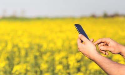 smartphone-mobile-man-grass-plant-technology-982159-pxhere.com