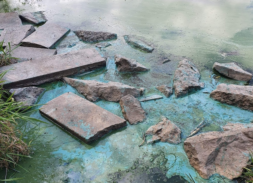 Blue algae Craigavon lakes