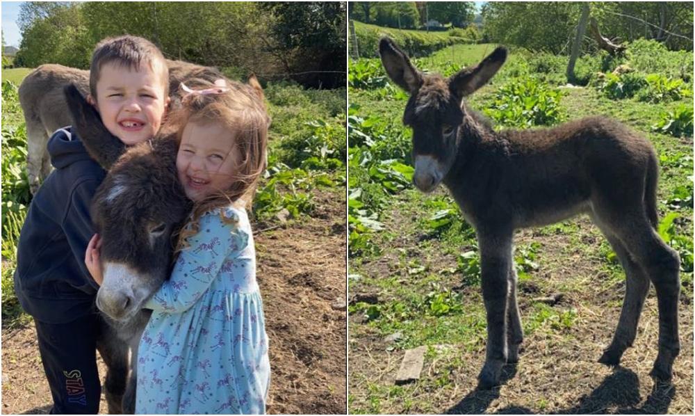 Missing donkey