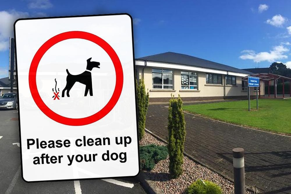 Markethill Primary dog poo