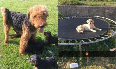 Stolen dogs Keady