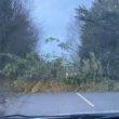 Markethill tree down