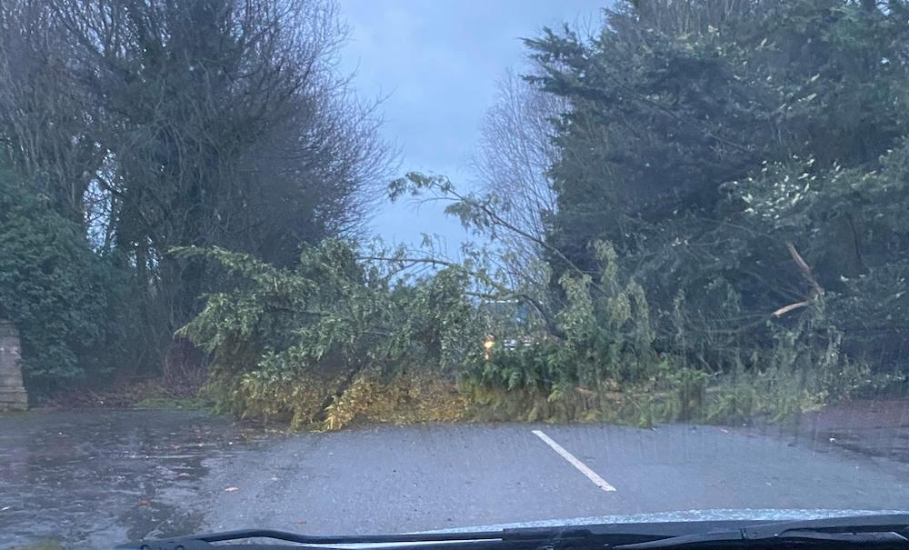 Markethill tree down