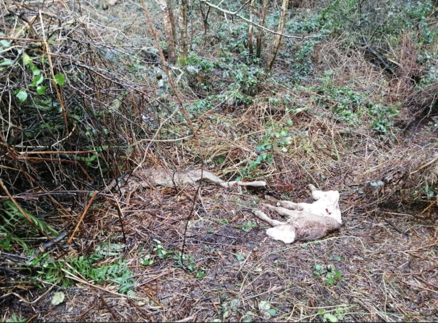 carcases dumped south armagh