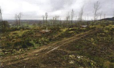 Glendesha Forest in Forkhill